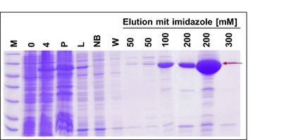 proteinexpression_MB_Homepage_ger.jpg