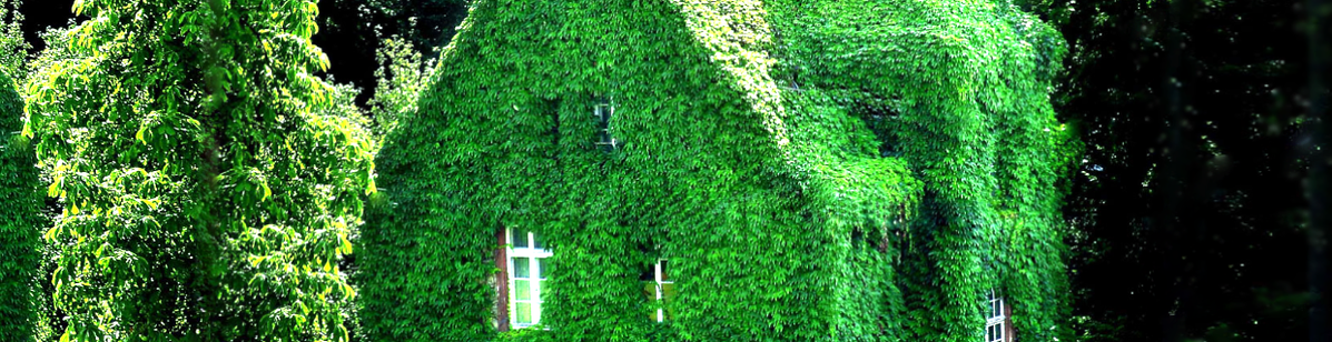 You see an overgrown house at the botanical garden