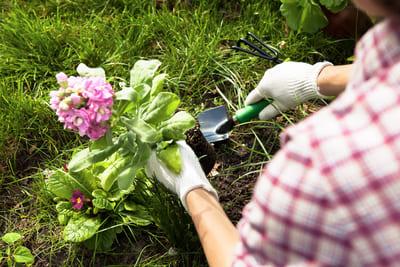 Ausbildung zum/zur Gärtner/in (Foto: Colourbox.de/Takoburito)