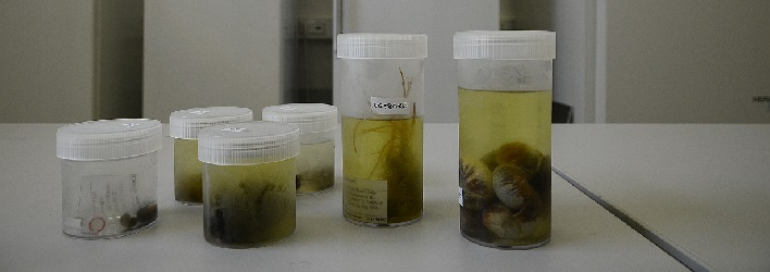 The University of Giessen Systematics and Biodiversity Collection (UGSB)